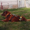 Lula relaxing in yard.