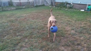 Playing fetch with his favorite ball is a good distraction/confidence builder.