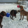 "Radar, Louie and Yukon playing in front of the ""tree bell"""