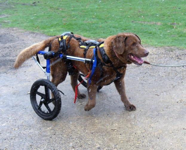 dog wheelchair