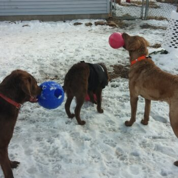 """Radar, Louie and Yukon playing in front of the """"tree bell"""""""